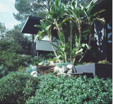 Ruth Shellhorn Midcentury Landscape Architecture In Southern California